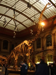 Brachiosaurus Brancai